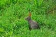 D9F-10-Rabbit.jpg