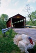 1J379 Martinsville Road Covered Bridge.jpg