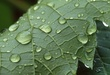 1M59 Grape Leaf.jpg