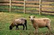 8F16 Malabar Farm1.jpg