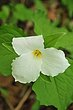 D10A-1500-Ohio Wildflowers.jpg