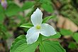 D10A-1505-Ohio Wildflowers.jpg