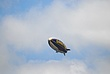 D11Q-16-Goodyear Blimp.jpg