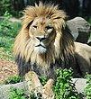 D1F1397 Akron Zoo.jpg