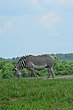 FX11F-266-The Wilds.jpg