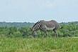 FX11F-269-The Wilds.jpg