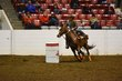FX12T-352-All American Quarter Horse Congress.jpg