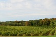 FX50-O-73-South River Vineyard.jpg