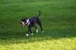 FX70A-237-Hueston Woods Dog Park.jpg