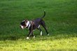 FX70A-238-Hueston Woods Dog Park.jpg