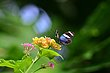 FX5L-409 Blooms and Butterflies.jpg
