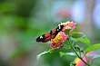 FX5L-414 Blooms and Butterflies.jpg