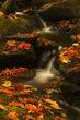Miller Brook Autumn.jpg