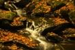 Well Into Autumn.jpg