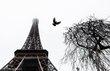PC Photos-Paris Flight.jpg