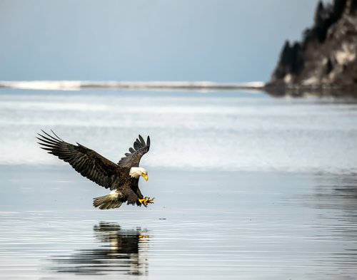 Eagle Diving on a Blue Beach.jpg