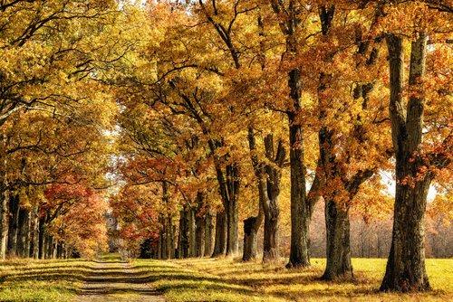 Mohouk Gatehouse Road in Autumn.jpg