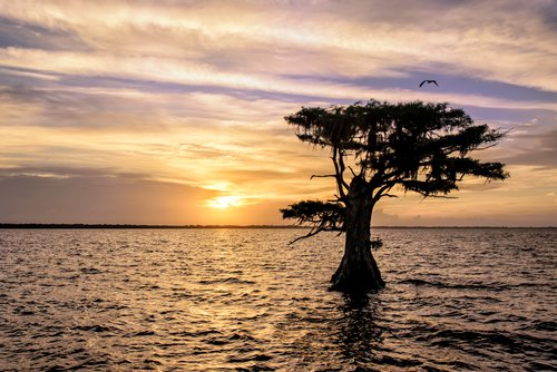 Blue Cypress Lake Sunrise.jpg