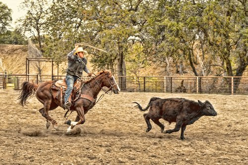 Cattle Roping.jpg