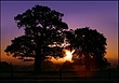 Windsor Great Park in morning.jpg