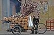 Sugarcane 1.jpg