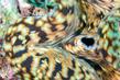 RajaAmpat-1040-b5dd8.jpg