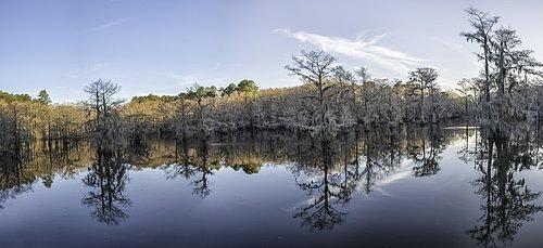 Caddo_Lake-1.jpg