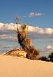 Desert monument.jpg