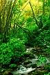 B004_Bamboo Forest_1.jpg