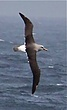 Albatross around our ship.jpg