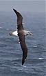 Albatross around our ship.jpg