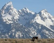 Grand Teton mountain.jpg