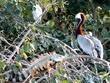 Iguana, Pelican & Egret.jpg