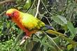 one of the many lovely birds in Australias far north.jpg