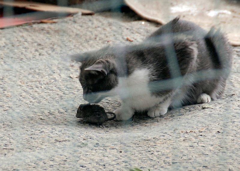 Cat and mice5_DSC3946.jpg
