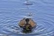 Beaver 14771.jpg