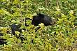 Black Bear 11419.jpg