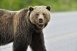 Grizzly Bear 12707.jpg