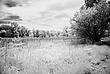 Arboretum Meadow.jpg