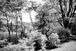 Arboretum Scene.jpg