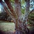 Arboretum Tree.jpg
