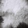Sky Trees.jpg