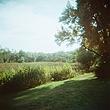 Summer Arboretum Meadow.jpg