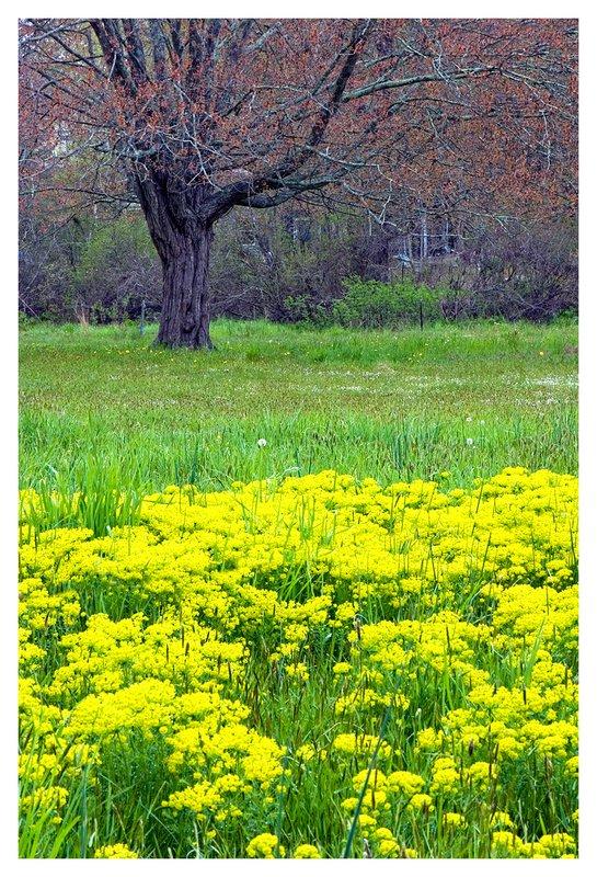 A-Field-in-Spring.jpg