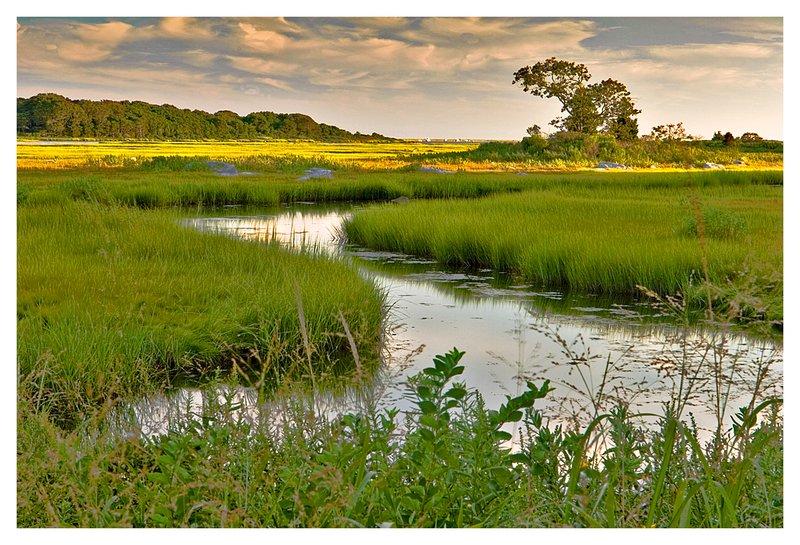 Barn Island-summer.jpg :: Pawcatuck - A small inlet at Barn Island is framed by marsh grasses