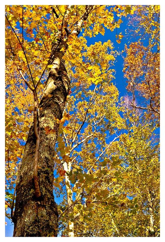 Barn-Island-fall.jpg :: Pawcatuck - Autumn at Barn Island.