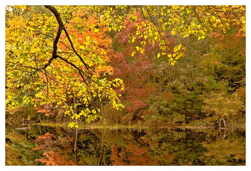 Clarks Falls pond-fall.jpg :: North Stonington - The bright colors of Autumn on a rainy day are reflected in tranquil pond.