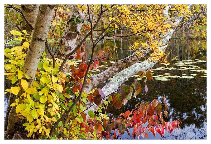 Grey-Autumn-Afternoon.jpg