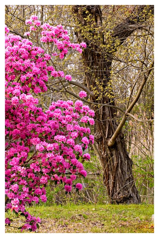 New-England-Spring.jpg