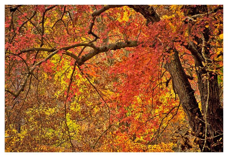 autumn-Stonington.jpg :: Stonington - Fall colors on a rainy day.